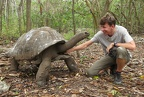 Aldabra giant tortoise (<i>Geochelone gigantea</i>).  They love a good scratch in those hard to reach places!