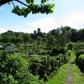 View across the allotments to the cathedral