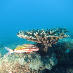Shag rock and Manta Bommie 28 Feb/ 1 Mar 2015