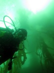 The blue-green world of the kelp forest
