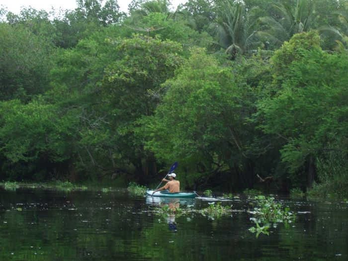 Peace of the mangrove