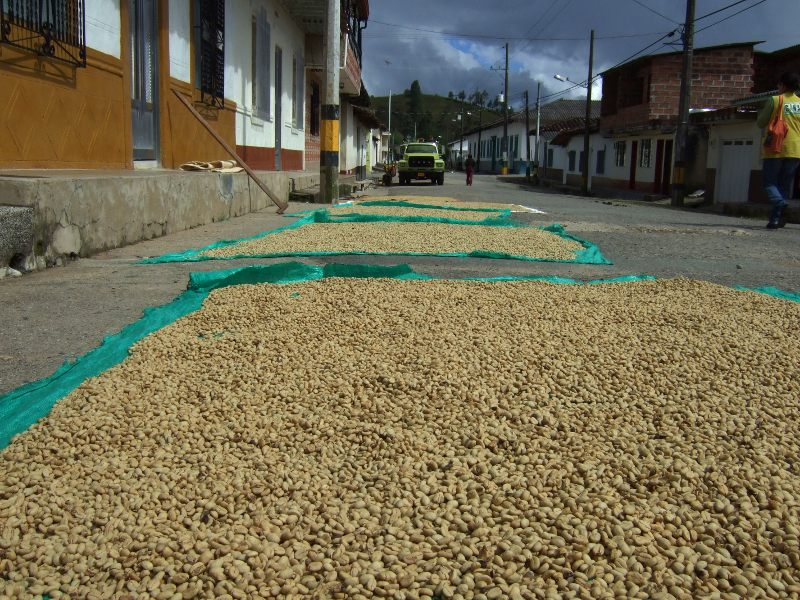 Coffee beans spead out to dry in the street in Gomez Plata