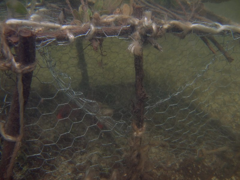 Fish traps are still used in Bonaire, though not frequently