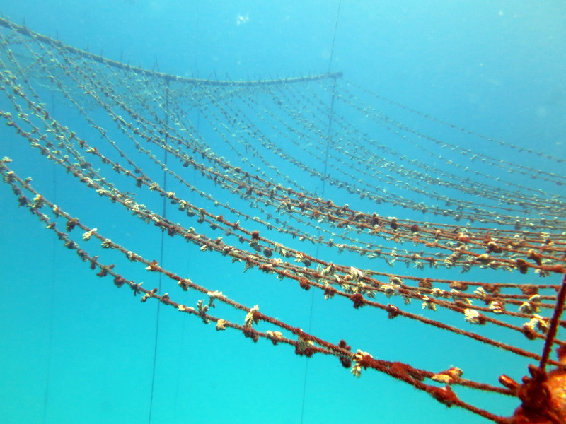 Rope nursery of juvenile corals