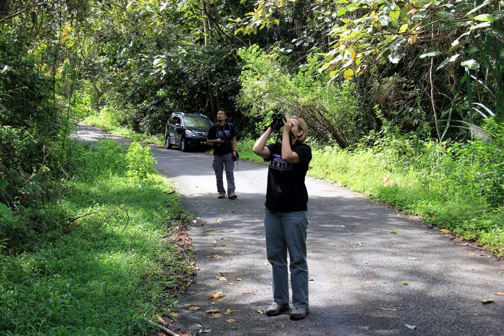 Birdwatching in the mountains of Meulaboh with Aceh Birder